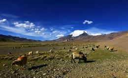 Montañas, prado y ovejas capsulados nieve fotografía de archivo libre de regalías