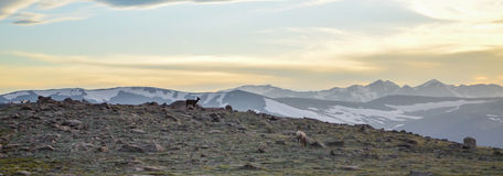 Montañas rocosas hermosas Foto de archivo libre de regalías