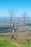 Montañas rocosas los E Imagen de archivo libre de regalías