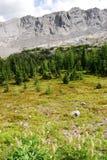 Montañas rocosas y prados Foto de archivo libre de regalías