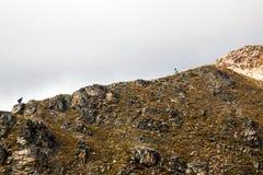 Montañas solas de Suiza de la subida de los turistas Fotografía de archivo libre de regalías