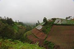 Montañas verdes, selva y granjas colgantes asiáticas imagen de archivo libre de regalías