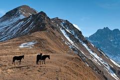 Montañas, viaje, naturaleza, lugar hermoso, animales imagen de archivo