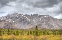 Montañas y árboles Imagen de archivo libre de regalías