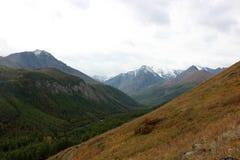 Montañas y abetos Foto de archivo