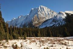 Montañas y bosques de la nieve Fotos de archivo libres de regalías