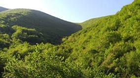 Montañas y bosques verdes fotos de archivo libres de regalías