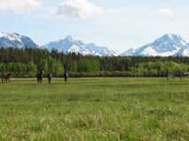 Montañas y caballos imágenes de archivo libres de regalías