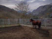 Montañas y caballos en invierno. Bellos Paisajes de montañas y rurales en las montañas Asturianas con animales domesticos Stock Image