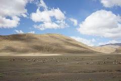 Montañas y cabras en Tíbet Fotos de archivo