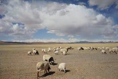 Montañas y cabras en Tíbet Foto de archivo libre de regalías