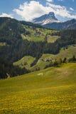 Montañas y campos de dientes de león amarillos Fotografía de archivo libre de regalías