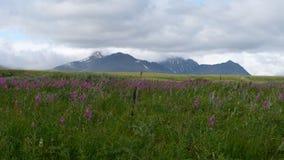 Montañas y cielo de la tundra en verano Imagen de archivo