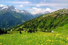 Montañas y flores alpestres en Austria Imagen de archivo libre de regalías