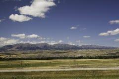 Montañas y ganado de Montana imagenes de archivo