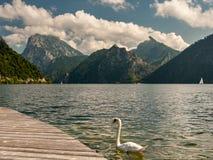 Montañas y nubes del cisne del lago Traunsee Austria en verano imágenes de archivo libres de regalías