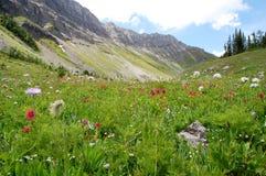 Montañas y prado Imagen de archivo