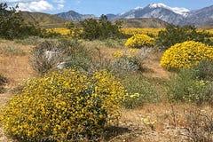 Montañas y prado Fotos de archivo libres de regalías