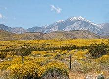 Montañas y prado Fotos de archivo