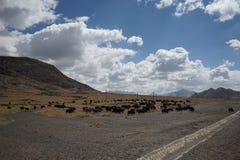 Montañas y yacs en Tíbet Imagen de archivo libre de regalías