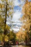 Monta?a colorida del bosque y de la nieve en la reserva de naturaleza de Yading imagen de archivo