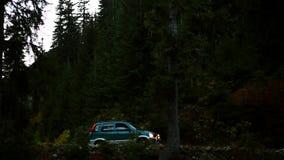 Monta?a Forest Valley ?rboles de pino con el bosque almacen de metraje de vídeo
