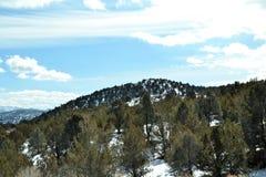 Montaña de la nieve del árbol de pino Fotos de archivo
