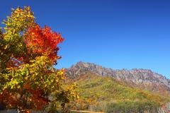 Montaña en otoño Imágenes de archivo libres de regalías