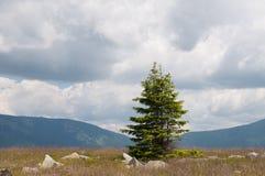 Montañas cubiertas por los bosques y dos árboles de pino Fotografía de archivo