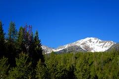 Montañas de Boulder - galena, Idaho Imagen de archivo libre de regalías