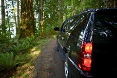 Montada através da floresta fotos de stock royalty free