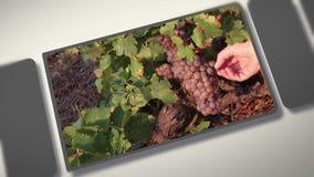 Montage über Weinthema stock video