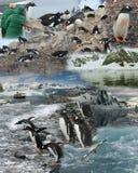 Montage - Antarctique Images libres de droits