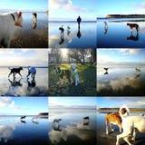 Montage av skämtsam hundkapplöpning fotografering för bildbyråer