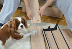 Montage d'une aide précieuse de Cabinet et de chien Image stock