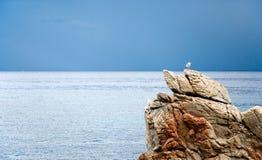 Montage de mouette sur la pierre sur la mer photographie stock libre de droits