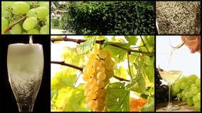 Montage de récolte de raisin clips vidéos