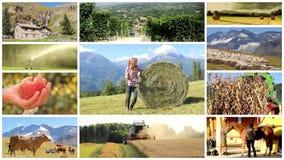 Montage för landsliv och lantbruk lager videofilmer