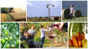 Montage för landsliv och lantbruk stock video