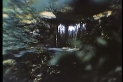 Montage of waterfall and flowers blooming stock footage
