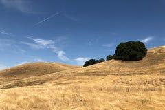 Montagem Diablo State Park em Walnut Creek em Califórnia fotografia de stock