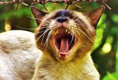 A montagem do gato extensamente aberta foto de stock royalty free
