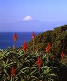 Montagem Fuji   imagens de stock royalty free