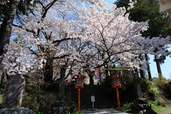montagem Fuji, Fuji san Foto de Stock Royalty Free