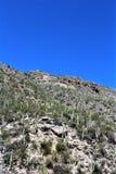 Montagem Lemmon, Tucson, o Arizona, Estados Unidos foto de stock