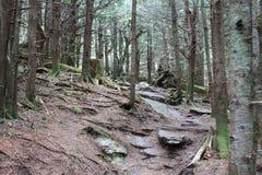 Montagem Mitchell State Park Trail Imagens de Stock
