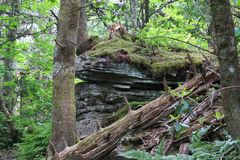 Montagem Mitchell State Park Trail Fotografia de Stock