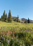 Montagem Owen e Ruby Peak a oeste de montículo com crista Fotos de Stock