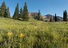 Montagem Owen e Ruby Peak a oeste de montículo com crista Foto de Stock Royalty Free
