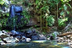Montagem Tamborine Gold Coast Queensland Austrália Fotos de Stock Royalty Free